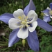 "<p><strong>Aquilegia coerulea - Blue Columbine</strong></p><p><strong>Light: </strong><img src=""http://champoegnursery.com/wp-content/uploads/2014/09/icon_full_sun.gif""/> / <img src=""http://champoegnursery.com/wp-content/uploads/2014/09/icon_partial_shade.gif""/></p><p> <strong>Water: <img src=""http://champoegnursery.com/wp-content/uploads/2014/09/icon_dry.gif""/> / <img src=""http://champoegnursery.com/wp-content/uploads/2014/09/icon_moist.gif""/></p> <p> Max Height: </strong> 12  in. <strong> Max Width: </strong> 12  in. </p><p><strong>Description: </strong>This herbaceous plant flowers in the summer and has a faint, sweet fragrance.  It has five blue, pointed outer petals and five white, rounded inner petals. <strong>Zone: </strong>  7-9</p><p><img src=""http://champoegnursery.com/wp-content/uploads/2014/09/icon_butterfly.gif""/>  <img src=""http://champoegnursery.com/wp-content/uploads/2014/09/icon_hummingbird.gif""/>  <img src=""http://champoegnursery.com/wp-content/uploads/2014/09/icon_wildlife.gif""/></p>"