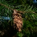 "<p><strong>Pseudotsuga menziesii - Douglas Fir</strong></p><p><strong>Light: </strong><img src=""http://champoegnursery.com/wp-content/uploads/2014/09/icon_full_sun.gif""/> / <img src=""http://champoegnursery.com/wp-content/uploads/2014/09/icon_partial_shade.gif""/></p><p> <strong>Water: <img src=""http://champoegnursery.com/wp-content/uploads/2014/09/icon_dry.gif""/> / <img src=""http://champoegnursery.com/wp-content/uploads/2014/09/icon_moist.gif""/></p> <p> Max Height: </strong> 200 ft. <strong> Max Width: </strong> 50 ft. </p><p><strong>Description: </strong>This majestic tree has thick bark, which makes it somewhat resistant to fire.  It prefers sunny areas. <strong>Zone: </strong>  3-6</p><p><img src=""http://champoegnursery.com/wp-content/uploads/2014/09/icon_butterfly.gif""/>    <img src=""http://champoegnursery.com/wp-content/uploads/2014/09/icon_wildlife.gif""/></p>"